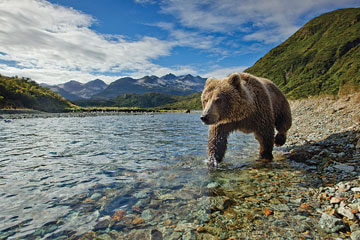 Seward - Alaska Wildlife Conservation
