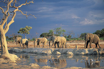 Damaraland – Etosha Nationalpark
