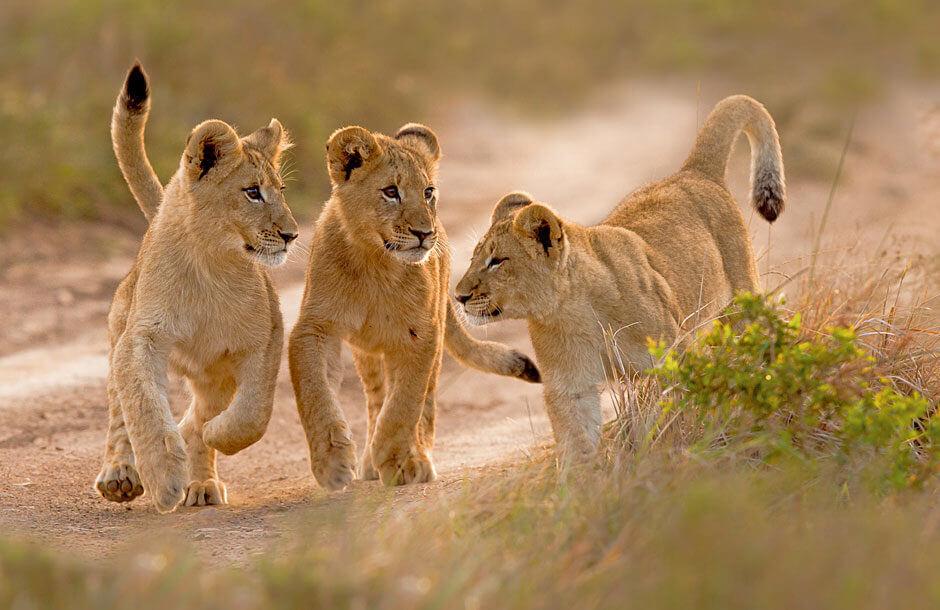 Kapstaden och Krugerparken