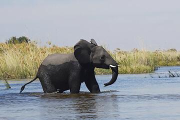Okavangodeltat