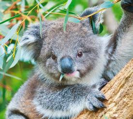 Australiens Höjdpunkter
