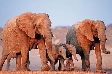 Safari i Botswana – Victoriafallen