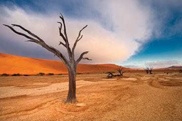 Hemkomst från Namibia