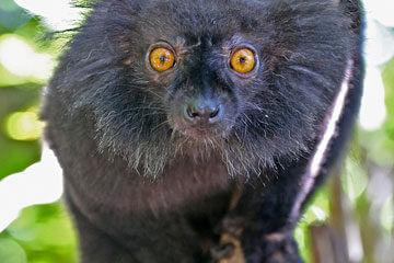 Madagaskar – Nosy Be