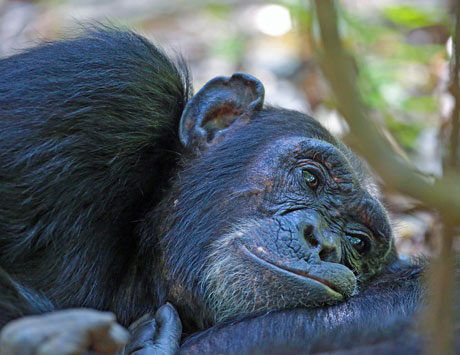 Dag 9: Schimpansernas rike