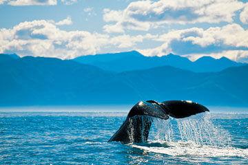 Auckland - Val- och delfinsafari