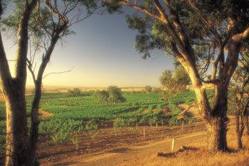 Vinprovning i Barossa Valley - Färja till Kangaroo Island