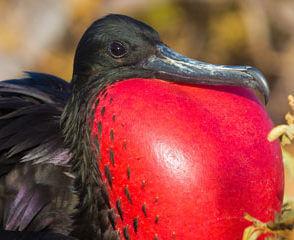 Reseafton Inkariket med Galapagos 9 april
