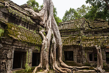 Ta Prohm - Spitler School