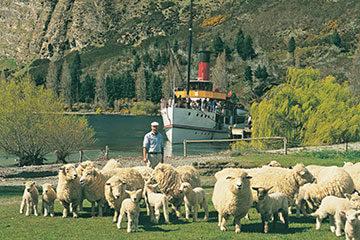 Queenstown - Besök på fårfarm