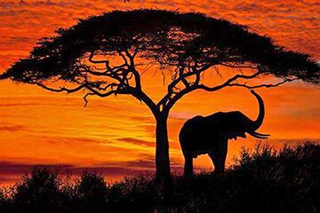 Hemkomst från södra Afrika