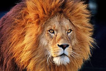 Safari Botswana – Savute