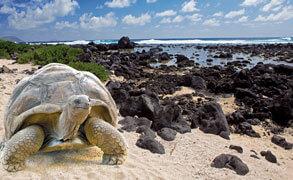 Kryssning på Galapagos