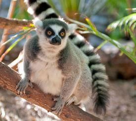 Madagaskar – Lemurernas rike