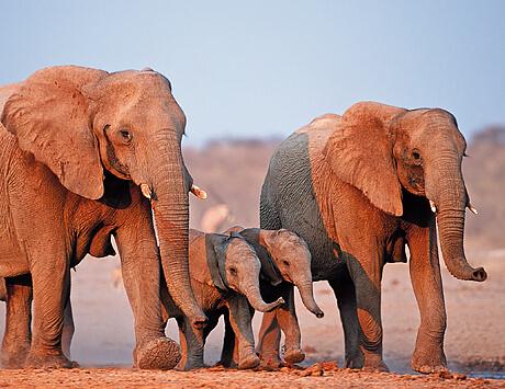 Safari genom Etosha Nationalpark