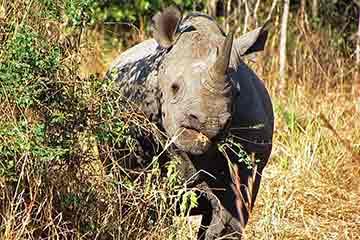 Safari i South Luangwa nationalpark