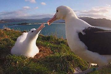 Christchurch - Dunedin