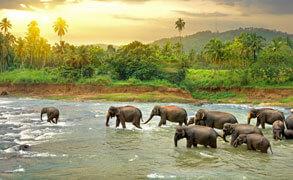 Sri-Lanka1