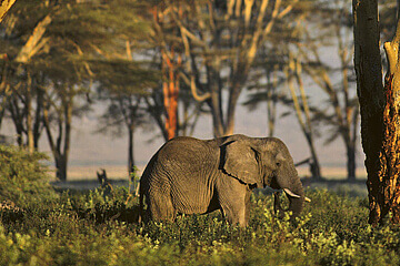 Arusha, Lake Manyara nationalpark