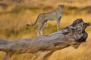 Tarangire nationalpark - avresa Arusha