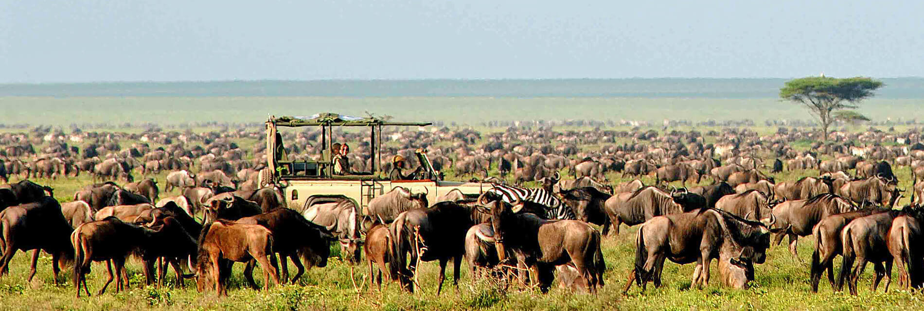 Tanzania safari Serengeti