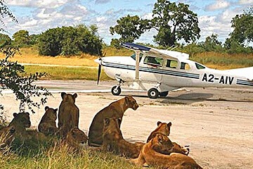 Tanzanias södra vildmark – Selous