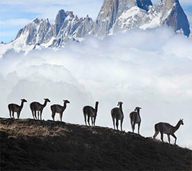 Patagonien med Påskön