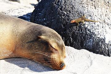 Galapagos – Lima