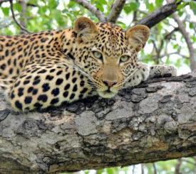 Sydafrikas vildmark