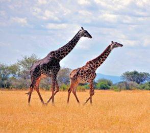 Tanzania – Online presentation (titta nu)