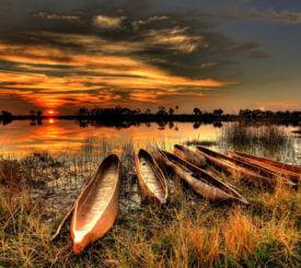 Botswana med engelsk guide