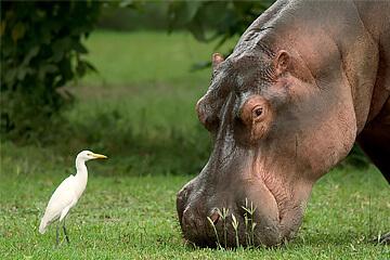 Safari i Liwonde nationalpark