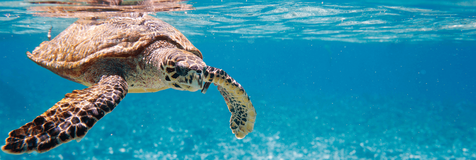 Seychellerna Kryssning Thabela Travel