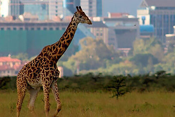 Ankomst Nairobi