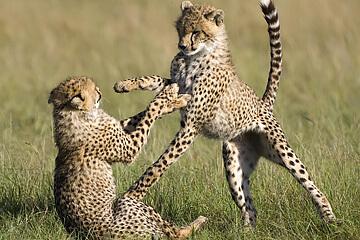 Masai Mara naturreservat