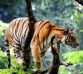 Indiens vildmark