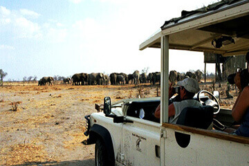 Savuti/ Chobe nationalpark