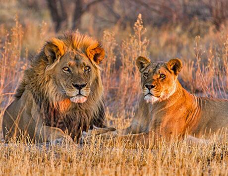 Dag 4: Safari i Botswana