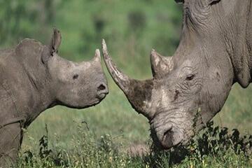 Safari på Kariega viltreservat & avresa från Sydafrika