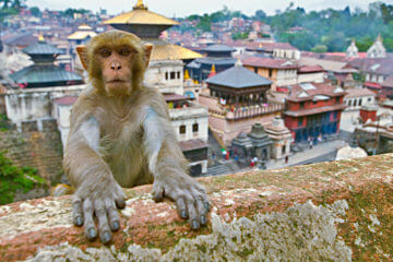 Bhaktapur - Bodhnath - Patan