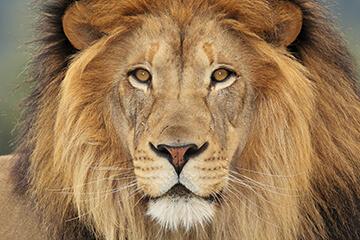 Ankomst Sydafrika och safari