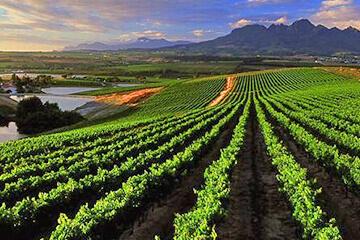 Kapstaden – Robertson Valley – Vingård