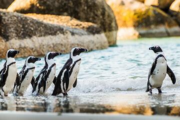 Godahoppsudden och pingviner