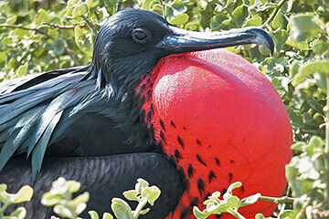 Kryssning  Galápagos