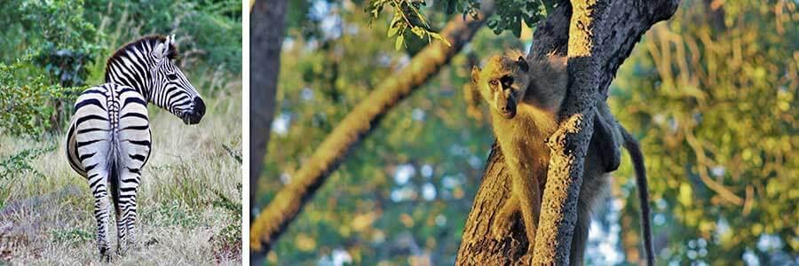 Chobe_nationalpark_i_Botswana