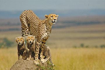 Safari i Tarangire Nationalpark