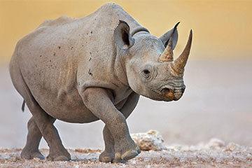 Safari i Serengeti nationalpark