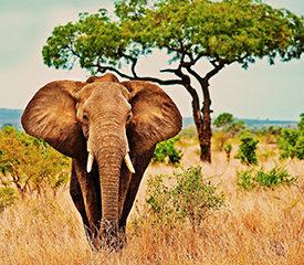 Tanzania safari med Serengeti