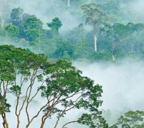 Naturvård med hjälp av turism