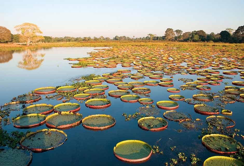 Natur i Pantanal. Brasilien